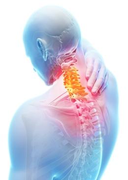 Vratna kralježnica općenito